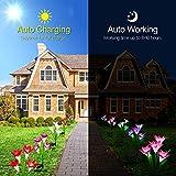 Outdoor Solar Lights, KOOPER 4 PackSolar Garden