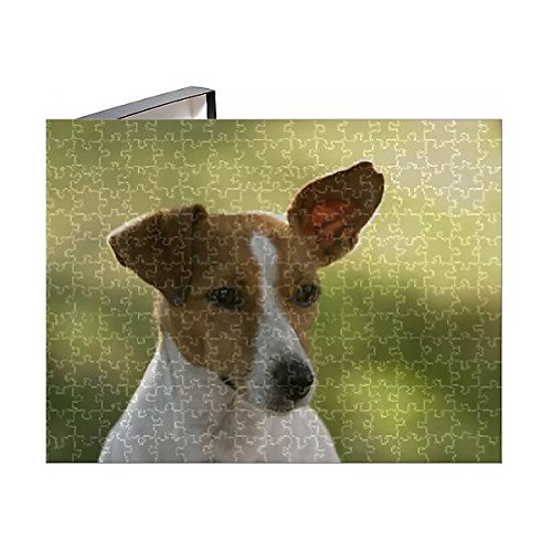 Media Storehouse 252 Piece Puzzle of Jack Russell terrier (Canis familiaris) (10162289) (Terrier Cane)