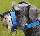 Dog Head Collar Halter Blue 5 Sizes