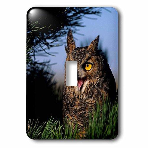 Hooting Owl Clock - 5
