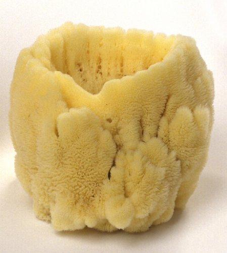 hydrea-london-decorative-ornamental-sea-sponge-small-deco-s