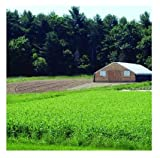David's Garden Seeds Cover Crop Spring Green Manure NE967 (Green) Organic One Pound Package