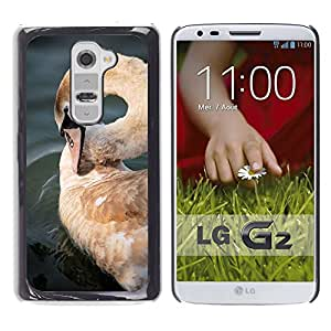 Hot Style Cell Phone PC Hard Case Cover // M00112633 Swan Cygnet Bird Young Cygnus // LG G2 D800 D802 D802TA D803 VS980 LS980