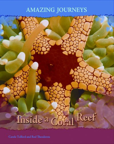 Download Inside a Coral Reef (Amazing Journeys) ebook
