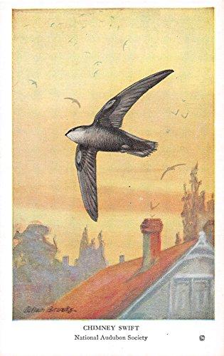 Chimney Swift 1939 Audubon Summer Birds of Eastern North America #14 (VG+)