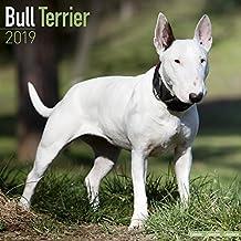 Bull Terrier Calendar 2019