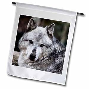 3dRose fl _ 57071_ 1gris lobo Looking recto en Le Jardín bandera, 12por 18pulgadas
