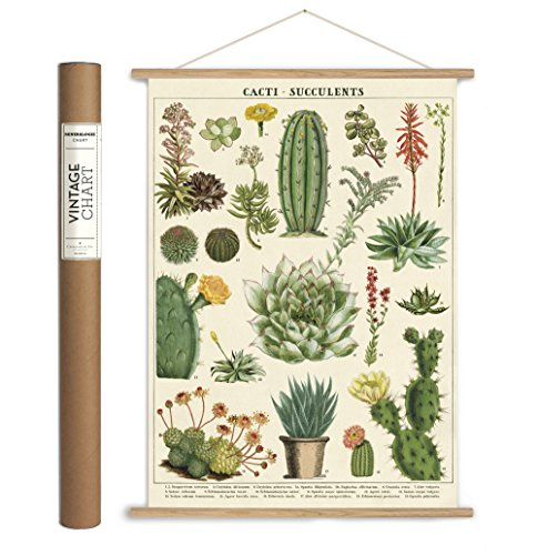 Cavallini Papers & Co., Inc. VPK/SUC Vintage Succulents Vintage Wall -