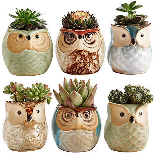 (Sun-E 2.5 Inch Owl Pot Ceramic Flowing Glaze Base Serial Set Succulent Plant Pot Cactus Plant Pot Flower Pot Container Planter Bonsai Pots with A Hole Perfect Gift Idea 6 in Set)