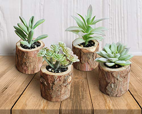 Artificial Succulents Unfinished Natural Wood Tree Bark Texture (Set of 4) Cute Assorted Decorative Mini Realistic Faux Plants for Home or Office Décor