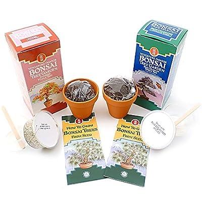(Japanese Maple & Blue Colorado Spruce ) Bonsai Tree Kit Christmas Xmas Holiday Stocking Filler Secret Santa Present