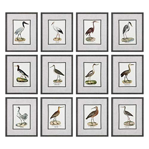 Uttermost Seashore Birds Prints - Set of 12