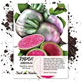 Package of 500 Seeds, Watermelon Radish (Raphanus sativus) Non-GMO Seeds by Seed Needs