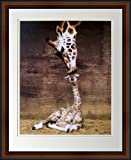 Giraffe, Mother Love, First Kiss by Ron D'Raine. Framed Art Photo. Custom Made Real Wood Dark Walnut with Black Trim Frame (18 1/4 x 22 1/4)