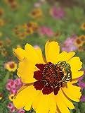 Pollinator Mix - Western 1 LB