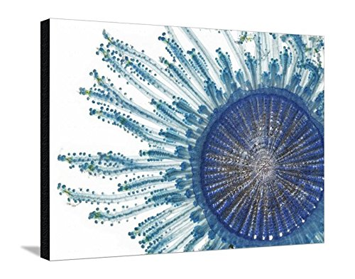Canvas Print Wall Art 'The Pigment of a Blue Button Jellyfish Blocks Ultraviolet Rays' by David Liittschwager, 24x32 in