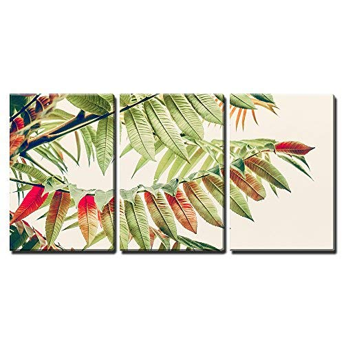 "wall26 - 3 Piece Canvas Wall Art - Beautiful Green Red Leaves. Tropical Leaves on Light Background. Autumn Fall Nature - Modern Home Decor Stretched and Framed Ready to Hang - 24""x36""x3 Panels"