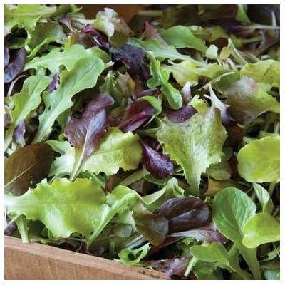 David's Garden Seeds Lettuce Mix Allstar Gourmet SL2301 (Multi) 500 Non-GMO, Open Pollinated Seeds : Garden & Outdoor