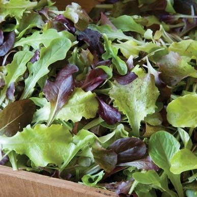 - David's Garden Seeds Lettuce Allstar Gourmet Mix SV2301 (Multi) 500 Non-GMO, Open Pollinated Seeds