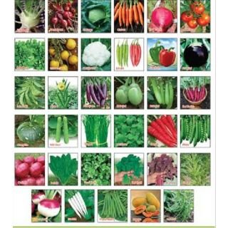 Charmant Sapretailer Vegetable Seeds For Terrace And Kitchen Gardening (Pack Of 30)