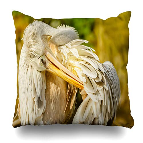 Ahawoso Throw Pillow Cover Pillowcase Square 16x16 Beak Close Profile Pelican Cleaning Feathers Animals Colourful Wildlife Beauty England Nature UK Decorative Cushion Case Home Decor Pillowslip (Best Feather Pillows Uk)