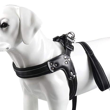 DINGG Arnés para Perros no-Tire Costura Reflectante asegurar la ...