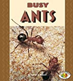 Busy Ants, Kristin L. Nelson, 082259885X