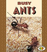 Busy Ants (Pull Ahead Books)