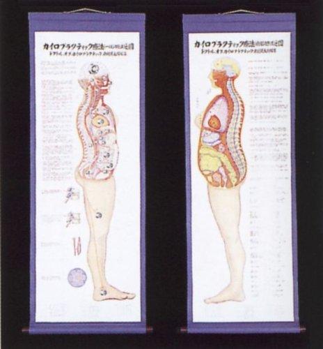 大特価放出! カイロプラクティック療法の図 B009RKGQES B009RKGQES, 美髪倶楽部:01f84ec2 --- a0267596.xsph.ru