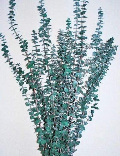 Preserved Eucalyptus Branches - Green