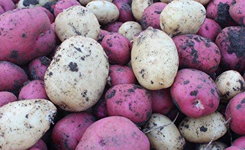 seed potatoes mix - 5