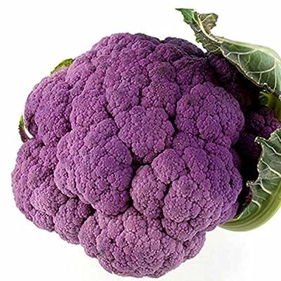 Graffiti Hybrid Cauliflower Garden Seeds - 100 Seeds - Non-GMO, Purple - Vegetable Gardening Seeds by Mountain Valley Seeds
