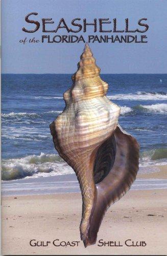 - Seashells of the Florida Panhandle