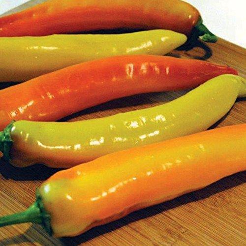 Hot Hybrid Pepper (Hot Sunset F1 Hybrid Hot Pepper Seeds - fresh, grilled, pickled or roasted.!!!(100 - Seeds))