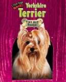 Yorkshire Terrier, Margaret Fetty, 1597167487