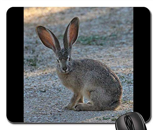 Mouse Pad - Black Tailed Jackrabbit Wild Nature Wildlife Black Tailed Jack Rabbit
