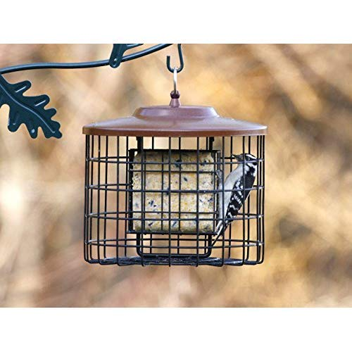 Brown-X-Squirrel-Proof-Bird-Feeder