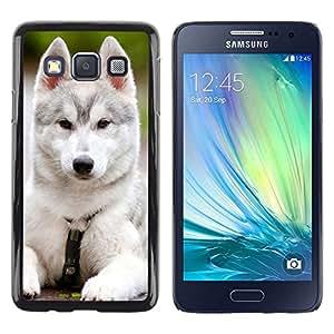 Be Good Phone Accessory // Dura Cáscara cubierta Protectora Caso Carcasa Funda de Protección para Samsung Galaxy A3 SM-A300 // Siberian Husky Malamute White Puppy Dog