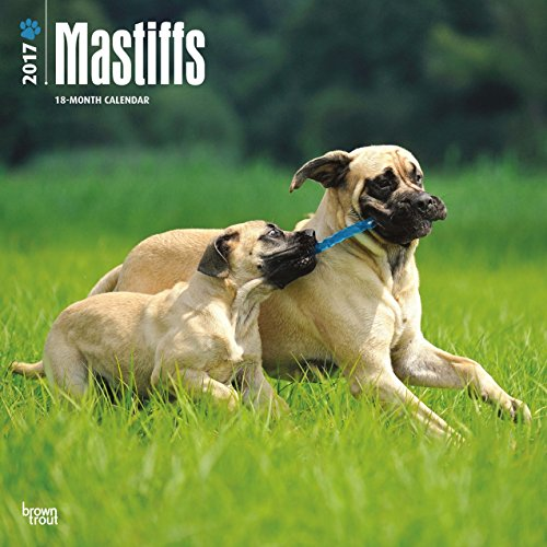 2017 Mastiffs Dogs Wall Calendar {jg} Best Holiday Gift Ideas - Great for mom, dad, sister, brother, grandparents, , grandchildren, grandma, gay, lgbtq.