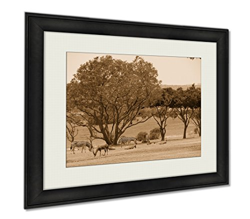 Ashley Framed Prints Animals At The Lion Park South Africa, Wall Art Home Decoration, Sepia, 30x35 (frame size), - Panthera Ebony