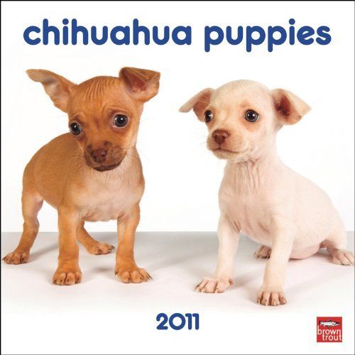 Chihuahua 2010 Calendar - Chihuahua Puppies 2011 7X7 Mini Wall by BrownTrout Publishers Inc (2010-08-01)
