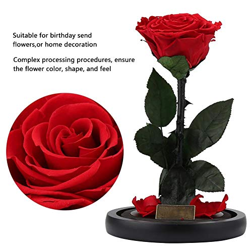 Preserved Immortal Fresh Rose with Light in Glass Forever Flower Lover Gift