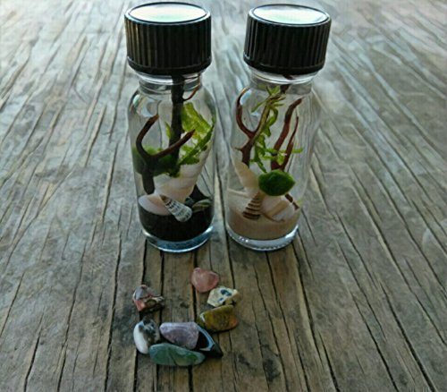 Marimo and Christmas Moss Travel Terrarium - Beach in a Bottle - Custom - FREE ECONOMY SHIPPING