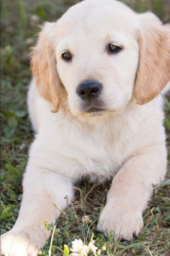 Golden Retriever Puppy Journal: 150 Page Lined Notebook