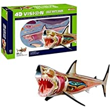 4D Vision Great White Shark Anatomy Model, Famemaster Fish ,#G14E6GE4R-GE 4-TEW6W251952