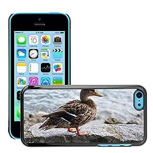 GoGoMobile Slim Protector Hard Shell Cover Case // M00118946 Duck Lake Water Bird Animal Fauna // Apple iPhone 5C