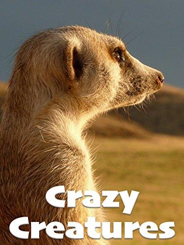 Crazy Creatures -