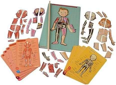 Janod- Imán Juego Educativo del Cuerpo Humano-Anatomía, Organos, Esqueleto, Músculos 76 Piezas Magnéticas-A Partir de 7 años-12 Lenguas (J05491): Amazon.es: Juguetes y juegos