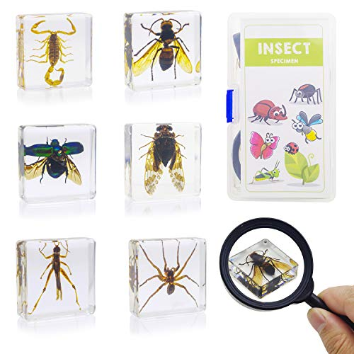 ELifeBox 6 PCS Insect Specimen Set,Cicada,Wasp,Spider,Scorpion,Locust,Chafer Resin Collection Science Toys (Best Pc Brand In The World)