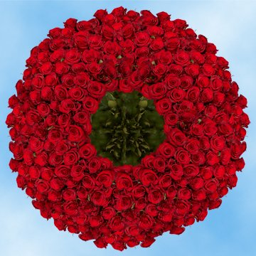 GlobalRose 500 Red Roses with enough classic flair in their bright red petals to warm the heart. by GlobalRose